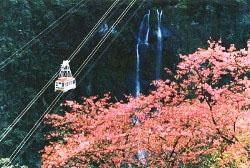 賞櫻趣  介紹台灣各地的 櫻花季 櫻花祭  烏來櫻花季 櫻花祭